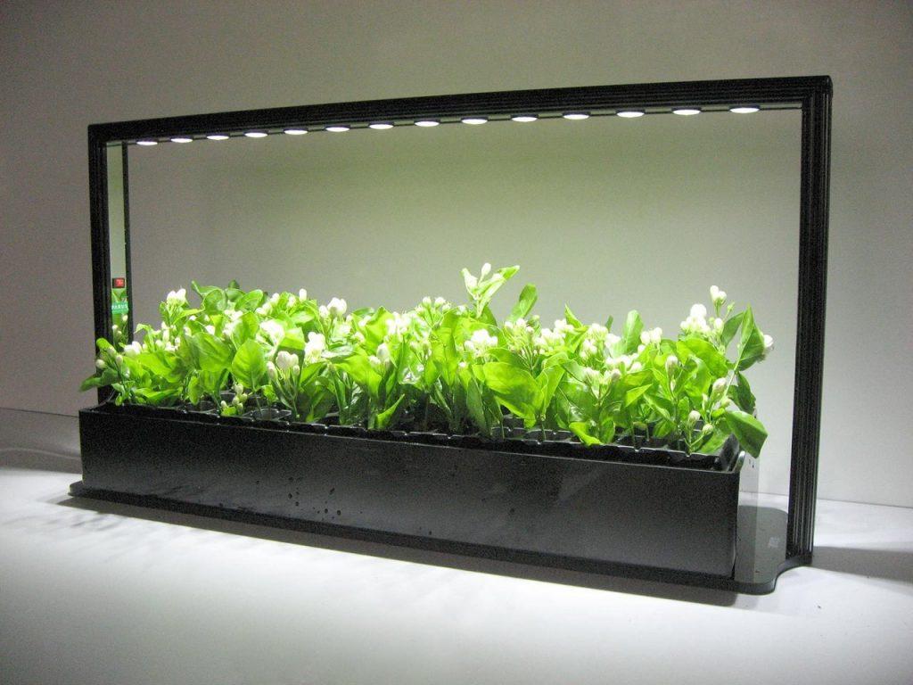 Картинки по запросу Накапливающиеся лампы для растений