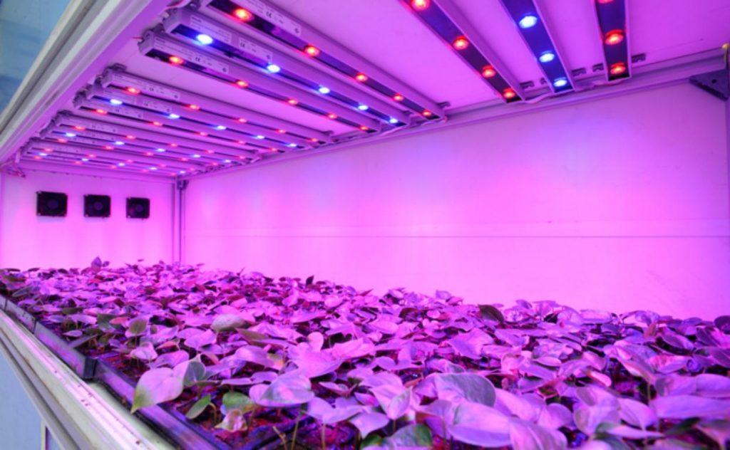 Картинки по запросу Ультрафиолетовые лампы для растений